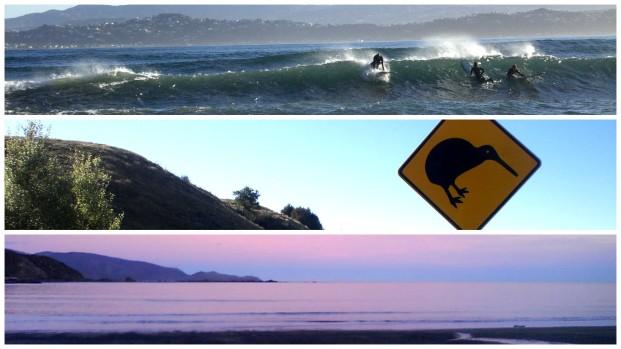 Wellington montage